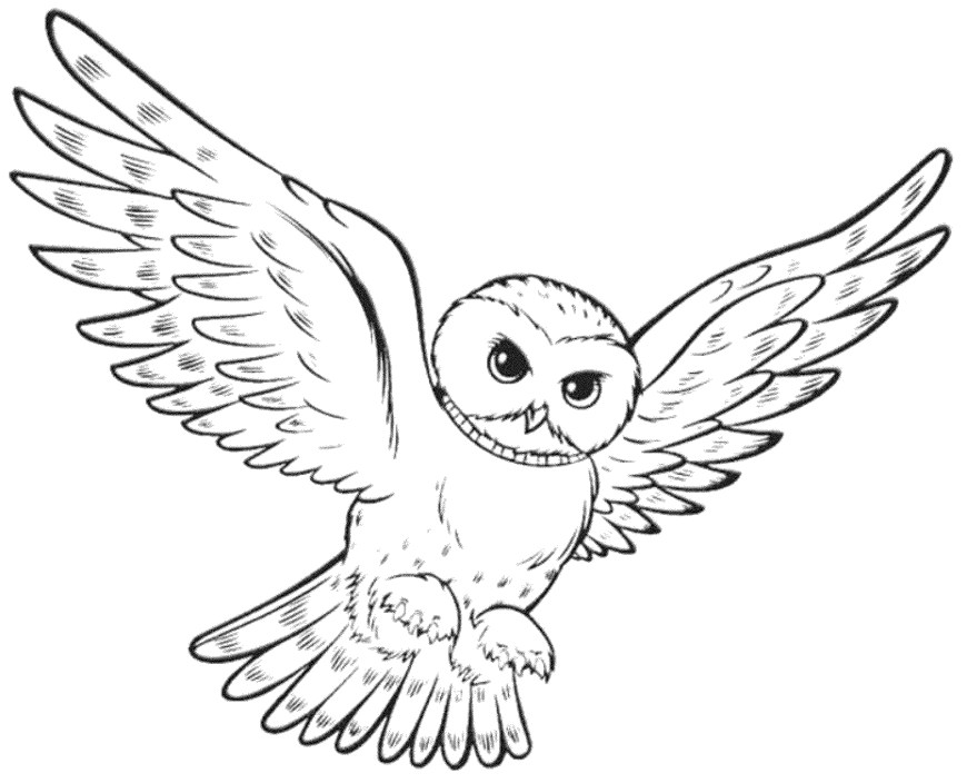 Owls Coloring Pages Owls Coloring Pages Print Download Owl For Your Kids 25512066