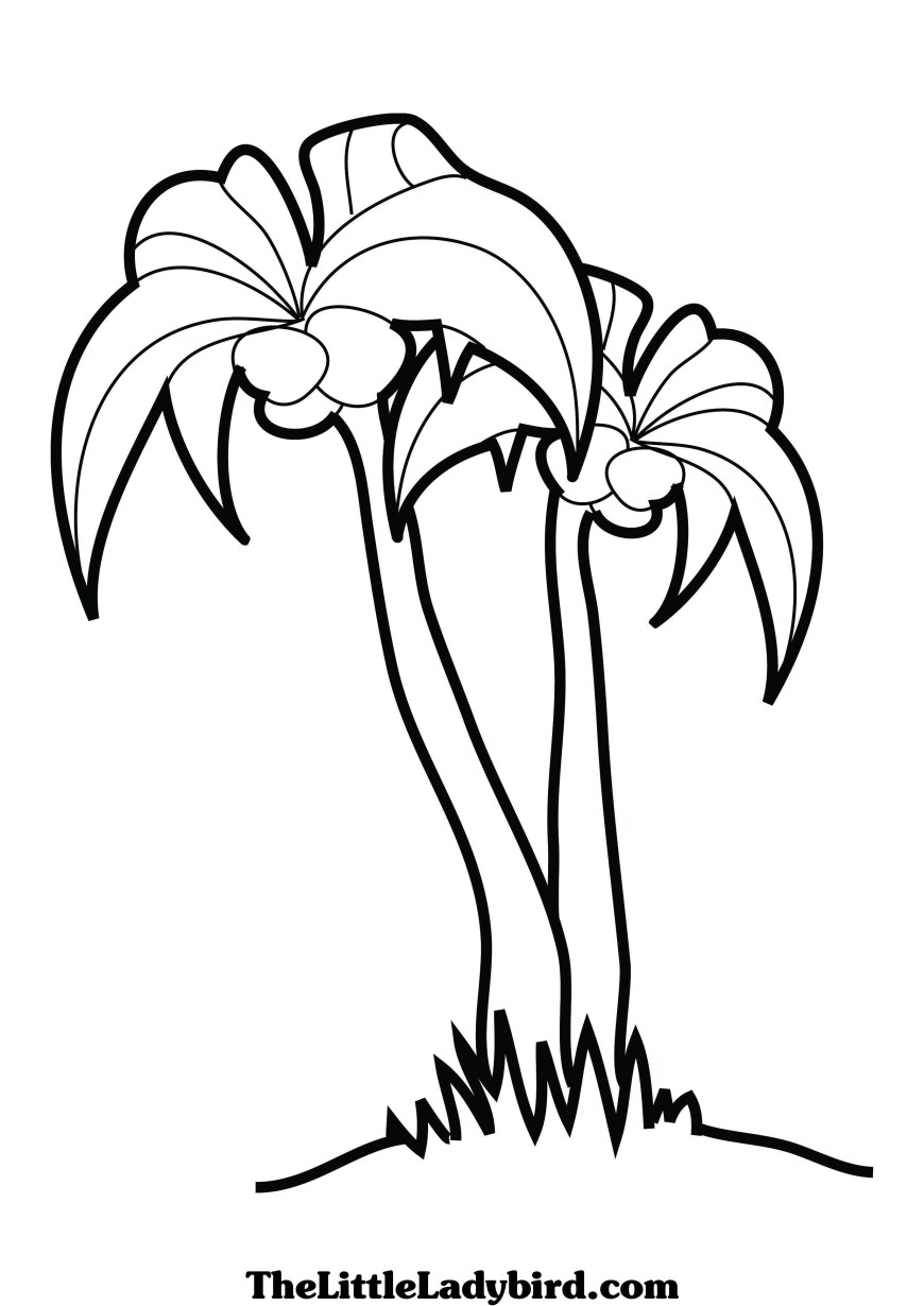 Palm Tree Coloring Page Free Palm Tree Coloring Page Thelittleladybird