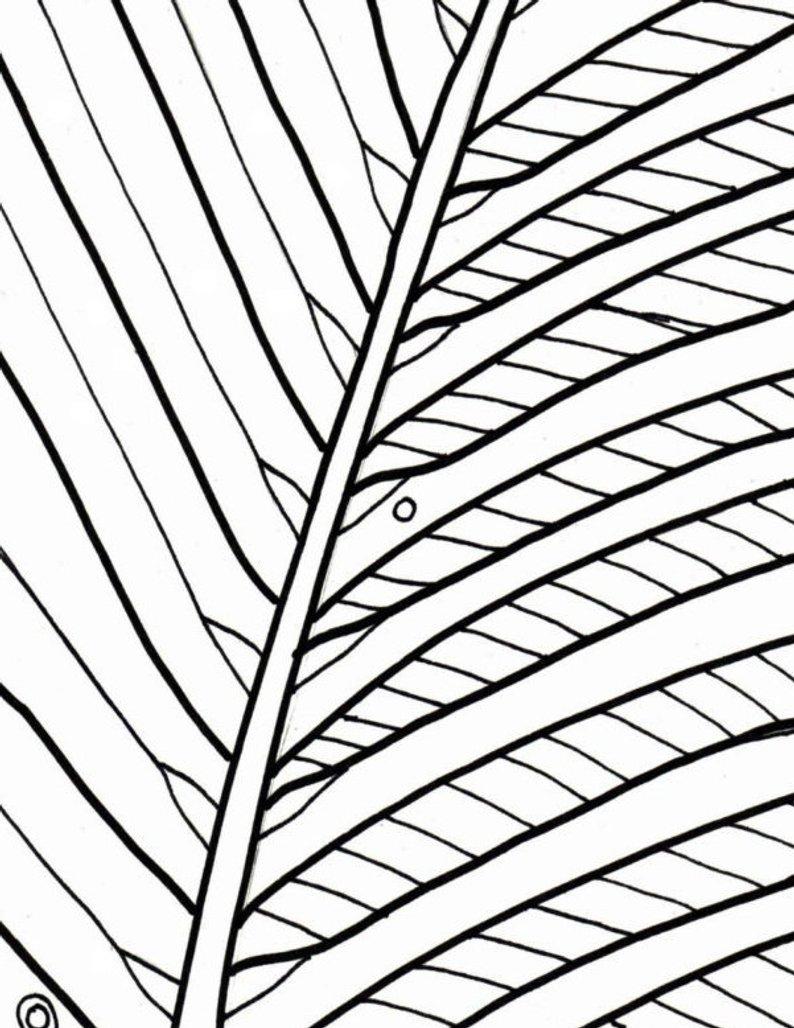 Palm Tree Coloring Page Palm Tree Coloring Page Beach Art Digital Download Adult Etsy