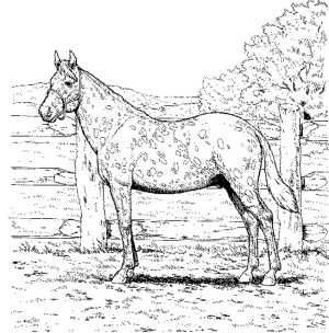 Printable Horse Coloring Pages Printable Coloring Pages Horses Gerrydraaisma