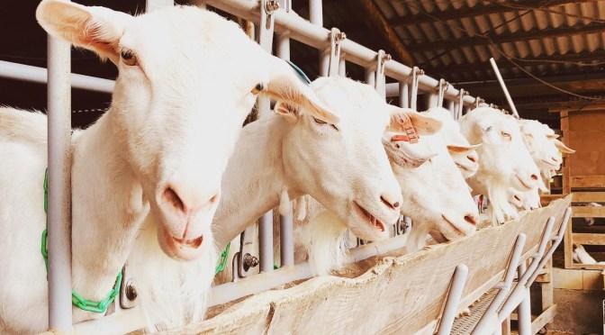 Diary: stop by the goat farm (Grateful Dead, ephemera, records, sandwiches)