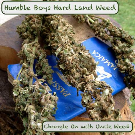Humble Boys Hard Land Weed – Choogle On #123