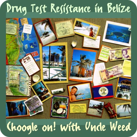 Drug Test Resistance in Belize – Choogle on #73