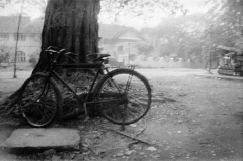 Bicycle and tree at park foreshore of Mahatma Gandhi beach