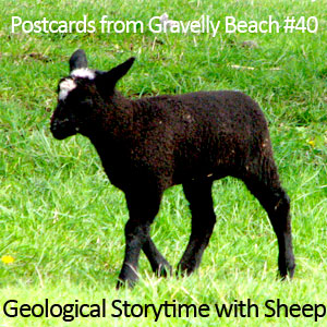 Pod bonus - Postcards fro Gravelly Beac - geologic sheep