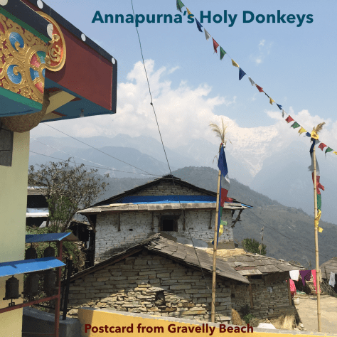 Annapurna's Holy Donkeys – Postcard #67