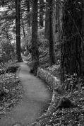 Trail at Wahkeena