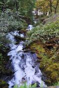 Cascade at Wahkeena