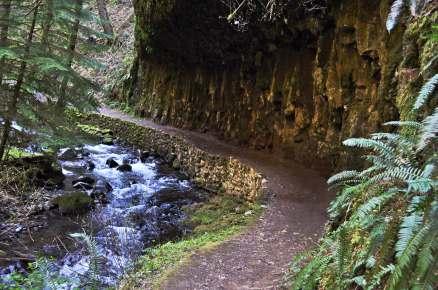 Larch Mountain Trail