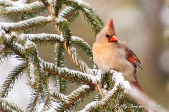 Snow Birds-018