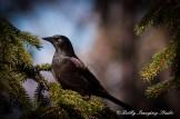 Snow Birds-027
