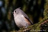 Snow Birds-030