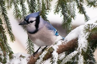 Snow Birds-038