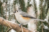 Jan 06 2015 Snowbirds-004
