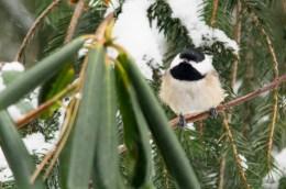 Jan 06 2015 Snowbirds-012