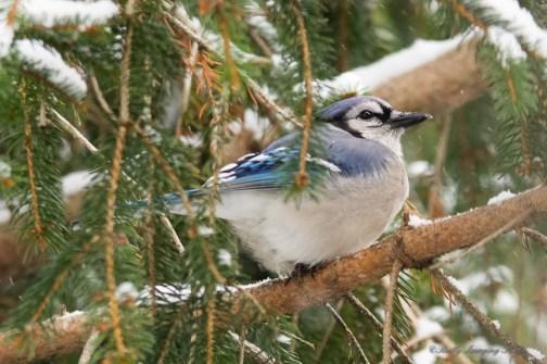 Jan 06 2015 Snowbirds-013
