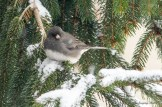 Jan 06 2015 Snowbirds-019