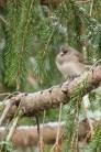 Jan 21 2015 Snowbirds-001