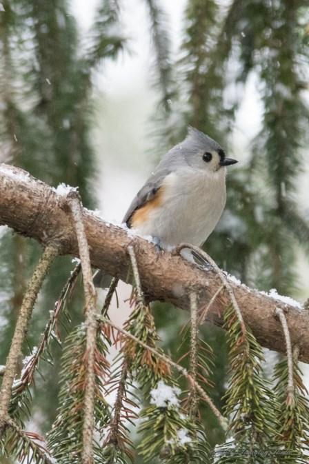 Jan 21 2015 Snowbirds-005