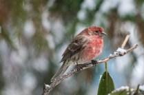 Jan 21 2015 Snowbirds-020