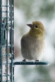 March 5 2015 Snowbirds-005