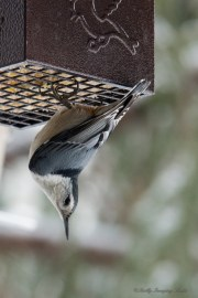 March 5 2015 Snowbirds-007