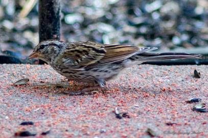 07 29 2015 Birds-002