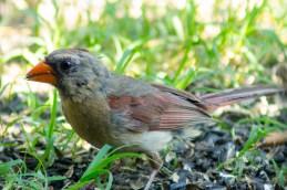 08 06 2015 Birds-003
