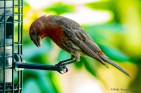 08 06 2015 Birds-005