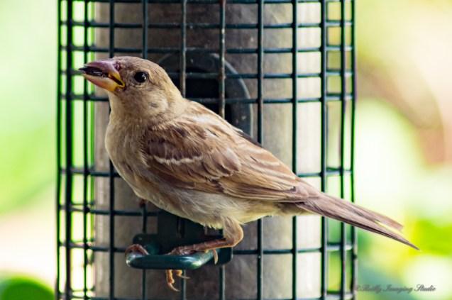July 31 2015 Birds-001