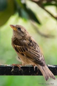 June 23 2015 Birds-02