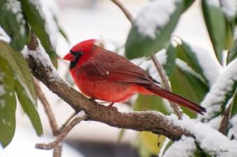 Best Birds-03