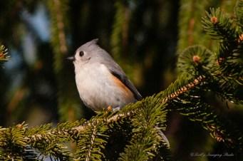 Best Birds-08