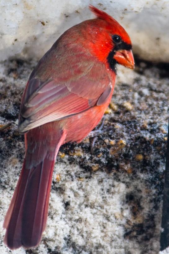 Best Birds-16