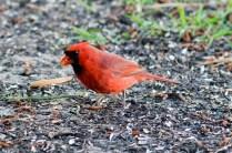 Best Birds-163