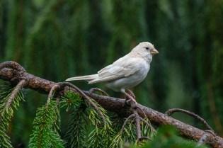 Best Birds-178