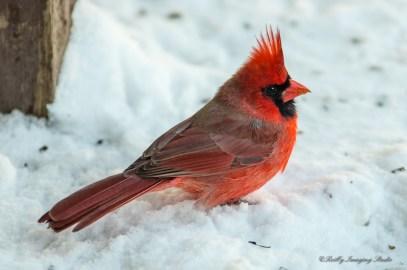 Best Birds-18