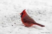 Best Birds-188