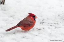 Best Birds-189