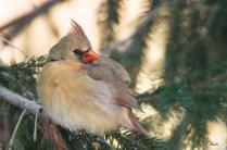 Best Birds-19