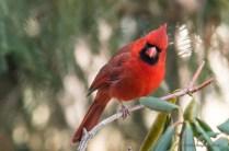 Best Birds-20