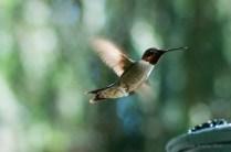 Best Birds-205