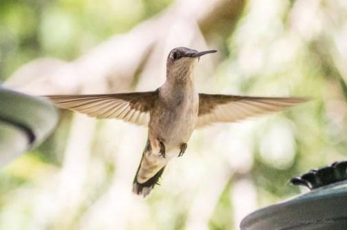Best Birds-216