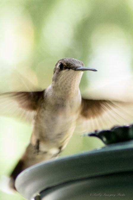 Best Birds-218