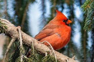 Best Birds-28