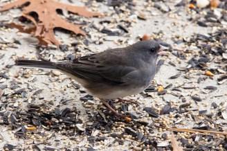 Best Birds-53