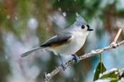 Best Birds-65