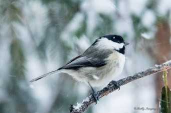 Best Birds-84