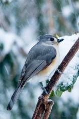 Best Birds-88