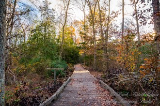 Atlantic County Park - Estell Manor - 01